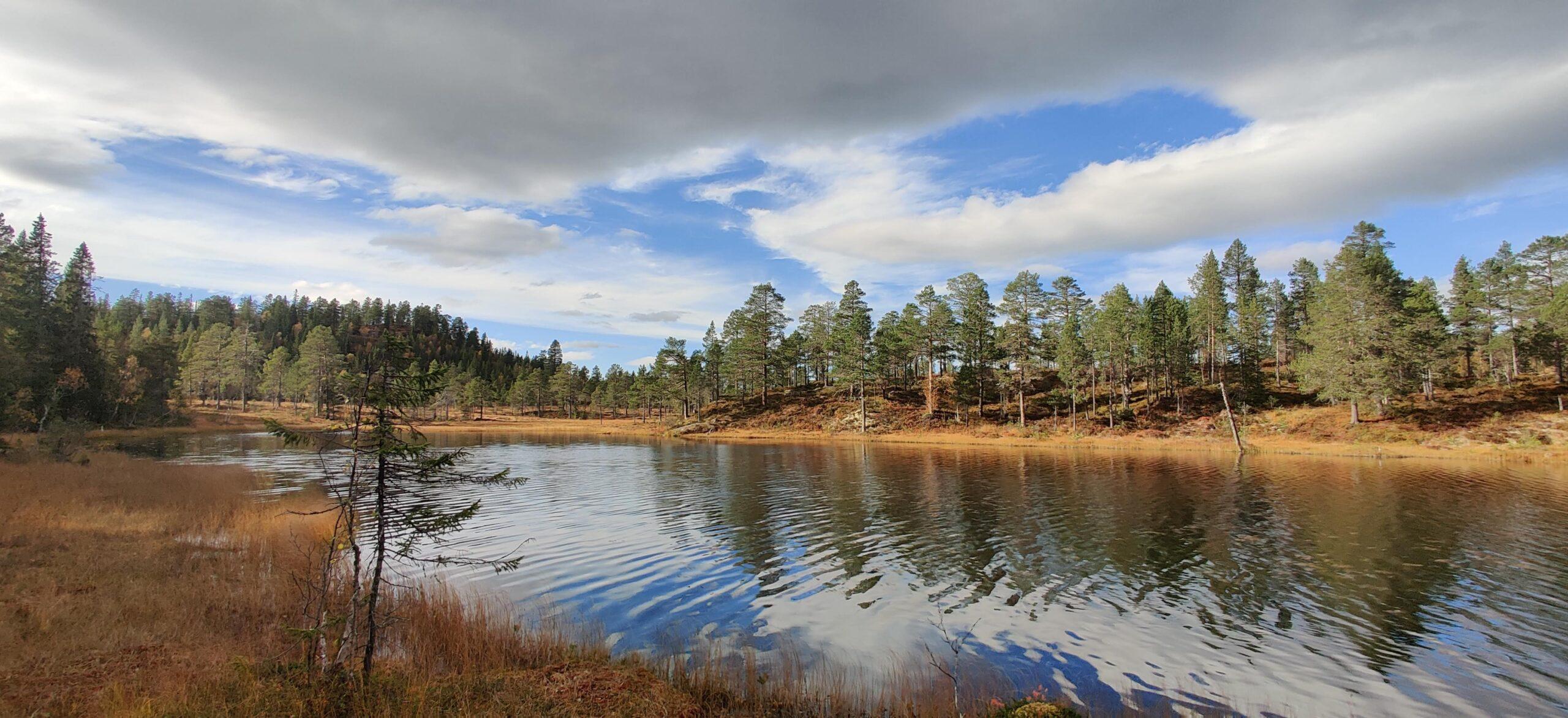 Vann i skogen (bilde)